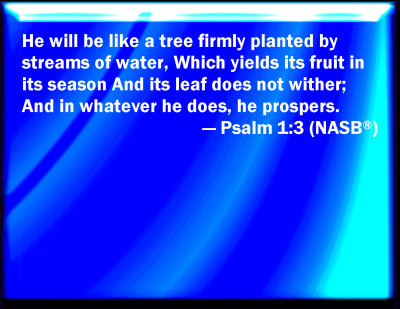 Bible Verse Powerpoint Slides For Psalm 1 3