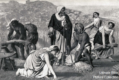 Ruth 3 Bible Pictures Boaz Protects Ruth