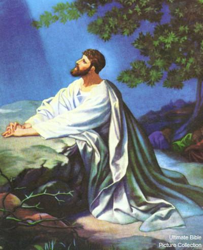 John 17 Bible Pictures Jesus Praying In The Garden Of Gethsemenae