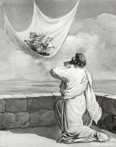 Acts 10 Bible Pictures Peter S Vision