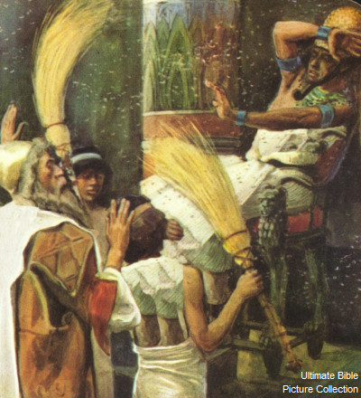 Exodus 8 Bible Pictures: Plague of Flies
